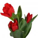 Тюльпан красный заказать