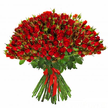 """Букет """"101 красная кустовая роза"""""""