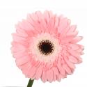 Розовая заказать