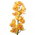 Орхидея Цимбидиум желтая с доставкой