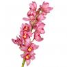 Орхидея Цимбидиум темно-розовый