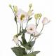 Лизиантус бело-розовый