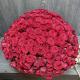 331 красная роза (Россия)