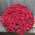331 красная роза (Россия) купить