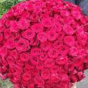 331 красная роза (Россия) заказать