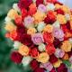 """Букет """"101 разноцветная роза"""" (Кения)"""