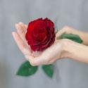 Выбор роз